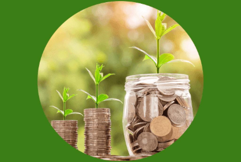 Zwei Stapel Geld und ein Behälter mit Münzen darin. Eine Pflanze kommt aus den jeweiligen Stapeln, bzw. aus dem Behälter.