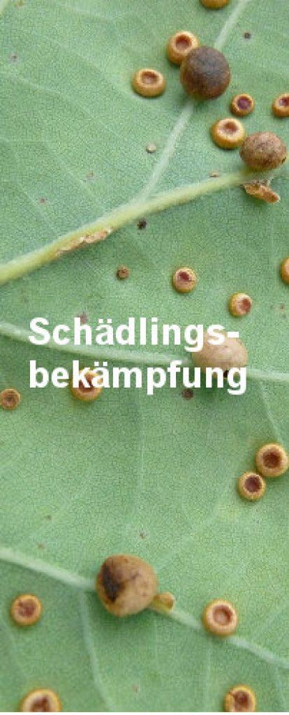 Schädlingsbekämpfung ist nicht immer einfach. Zu sehen ist die Rückseite eines Blattes, auf dem sich Schädling befinden.