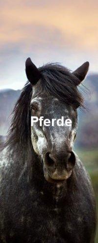 Ein Pferd in Nahaufnahme. Es hat weiße, schwarze, graue Farben.