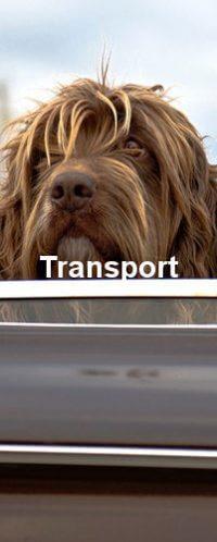 Wie man einen Hund transportiert ist sehr wichtig. Zu sehen ist ein langhaariger Hund dessen Haar im Fahrtwind weht.