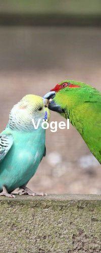 Vögel Obekategorie